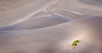 Peter Tulloch - Green in the Namib
